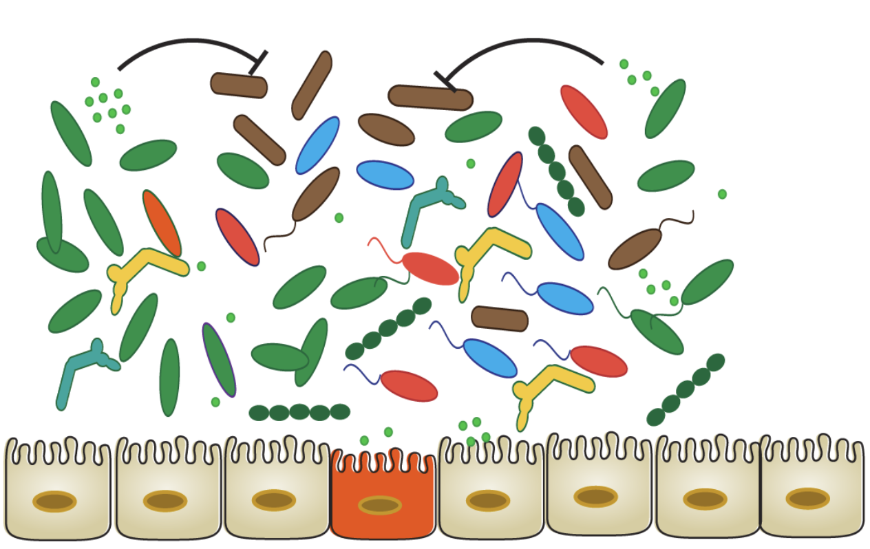 The diet-microbiome connection in inflammatory bowel disease